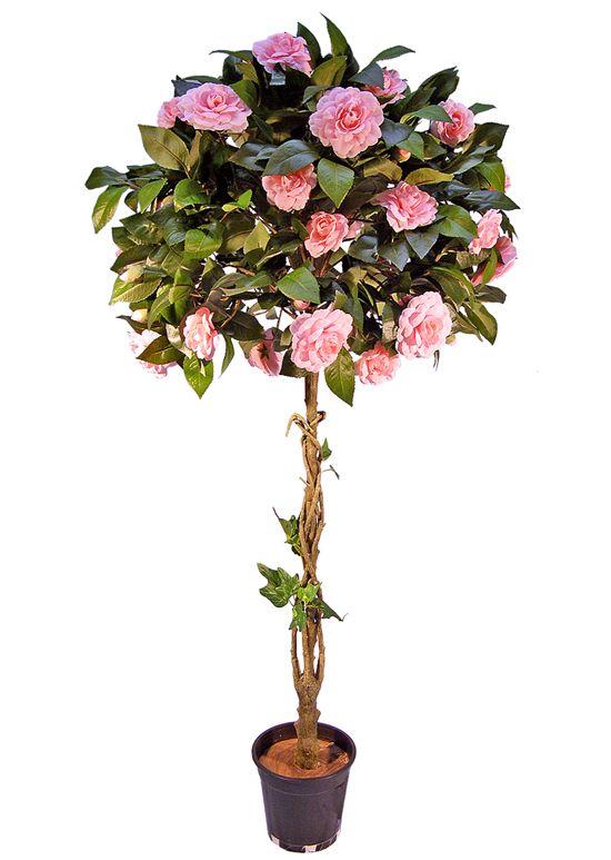 Camellia Tree Gardening Keeps Me Sane Pinterest Trees Topiaries And Topiary Trees