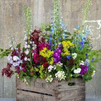 Spring Planting Ideas