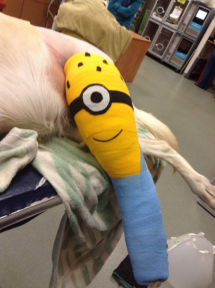 Be prepared if your pet comes in for a surgical