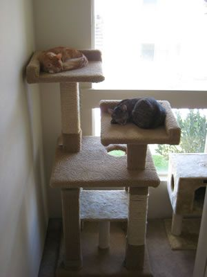 Customer Trees Cat Tree Plans How To Build Cat