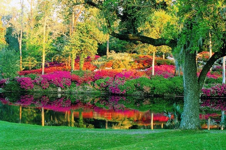 Middleton Place World in Bloom Pinterest Gardens, We