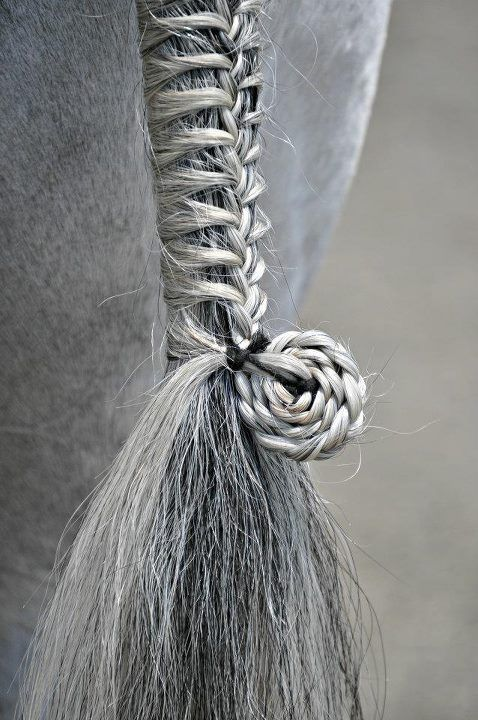 I am SO trying this hairstyle on a horse!!!! :) :) horses can have hairstyles to