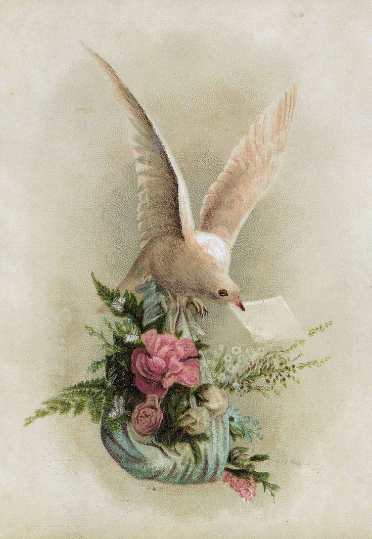 These are beautiful Victorian die cuts of white doves