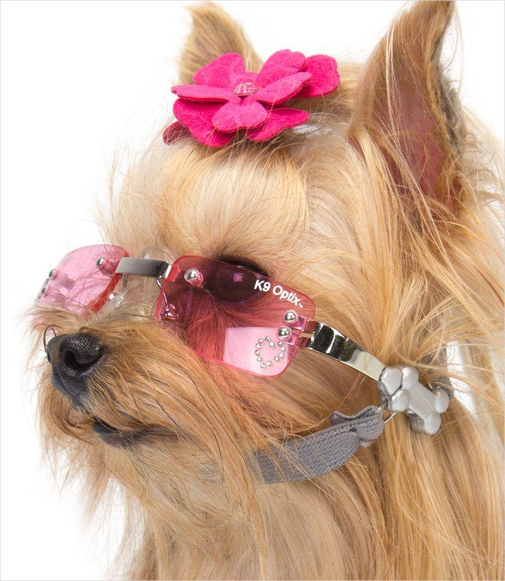 doggie sunglasses Google Search Canine Kiddies