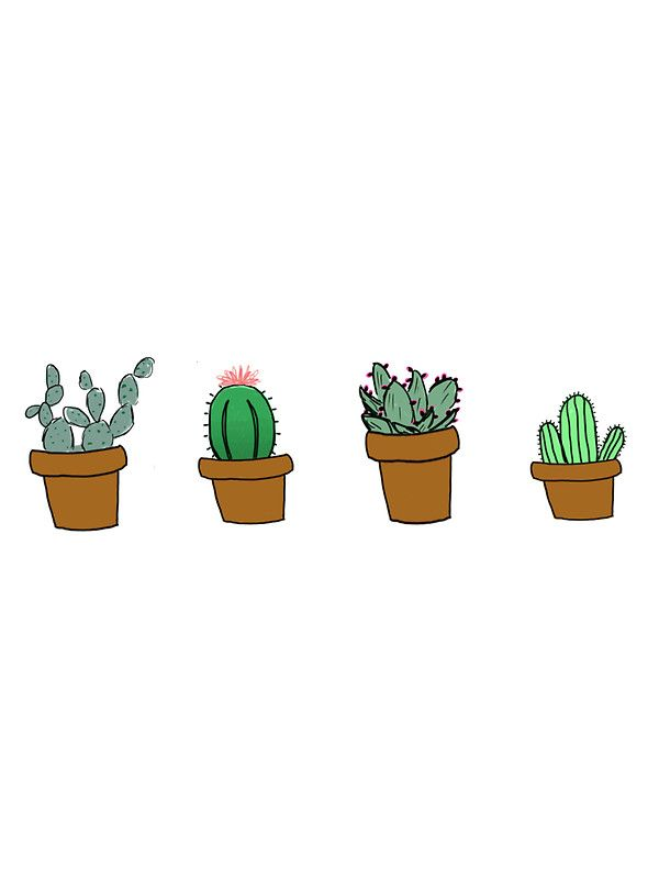 Plant Tumblr Cactus Mini
