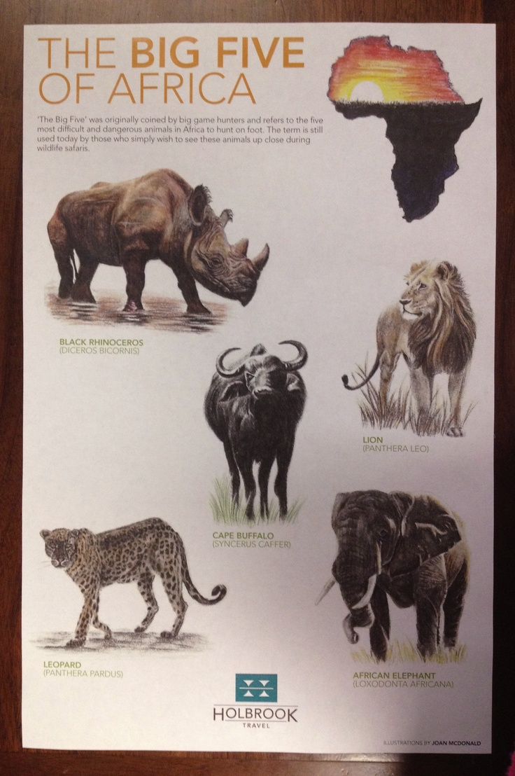 Africa's Big 5 Game Animals Let me see the world