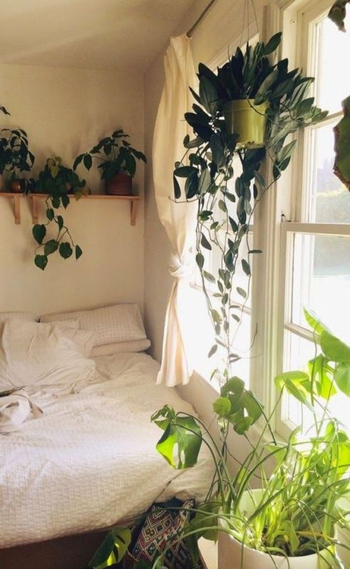 Image result for show plants bedroom