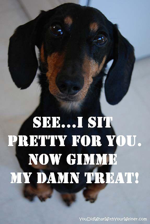 Happy Birthday Meme Beagle Adorable