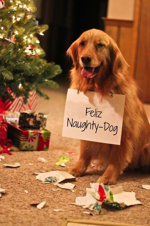 25 Best Ideas About Dog Christmas Cards On Pinterest