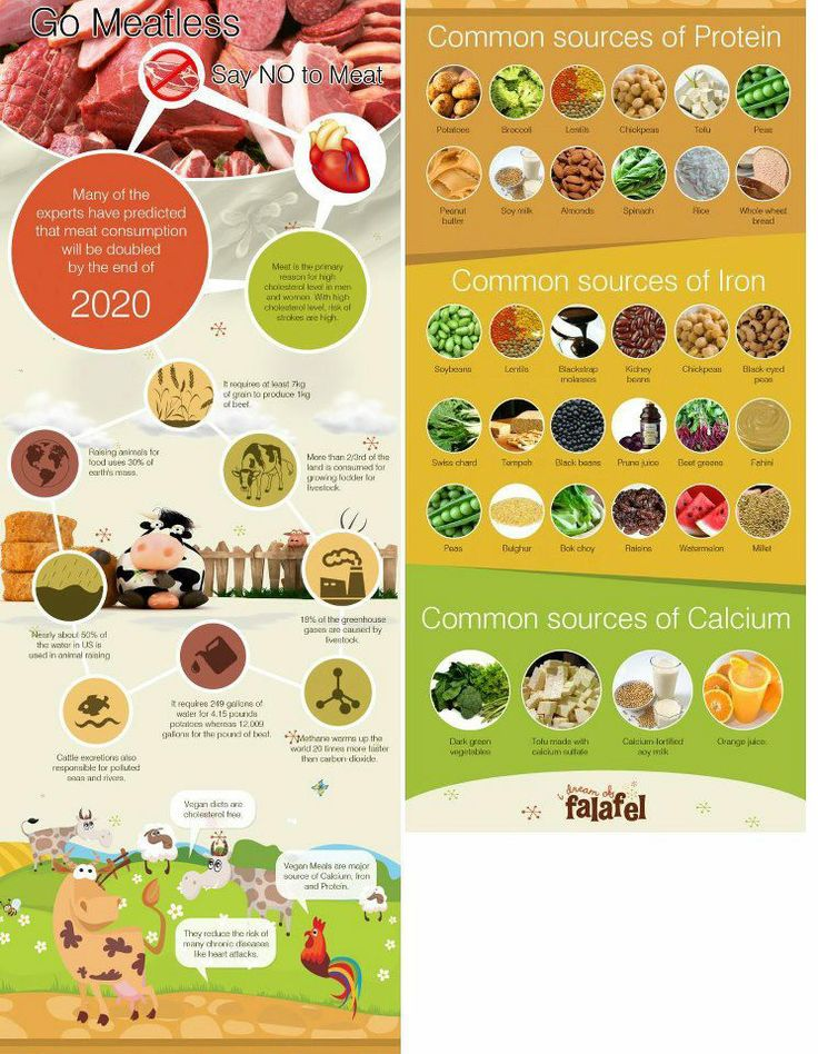 Common Sources of Vegan Protein, Iron and Calcium Vegan