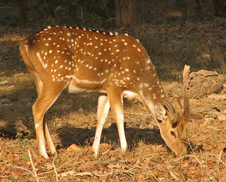 Animals From India different types of deers youtube