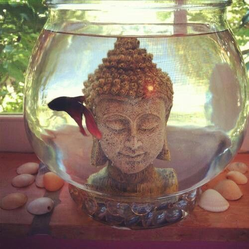 25 Best Ideas About Buddha Bedroom On Pinterest Hippie Room Decor Hippy Bedroom And Hippie Dorm