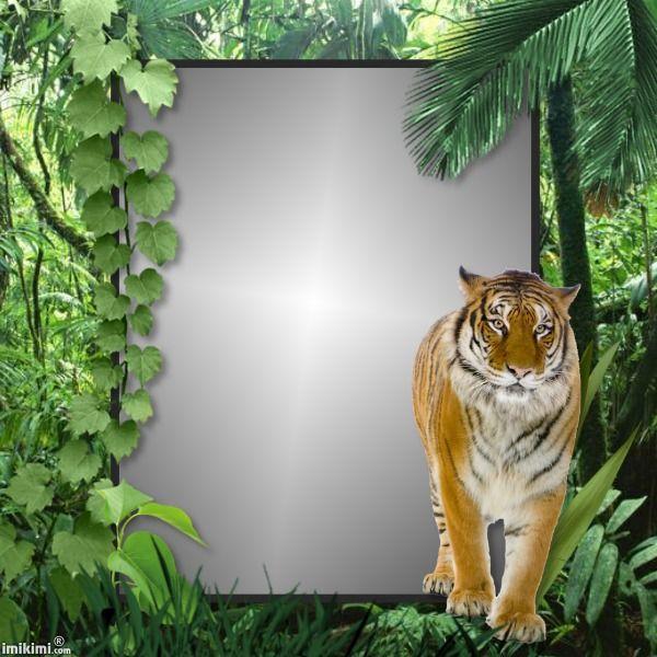 Jungle Walk Httpimikimicommainviewkimi1iJTP 38m