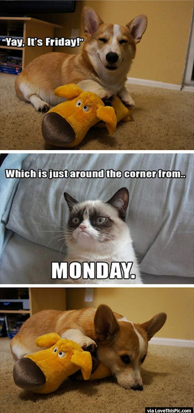 Grump Cat Ruins Friday friday happy friday tgif grumpy cat