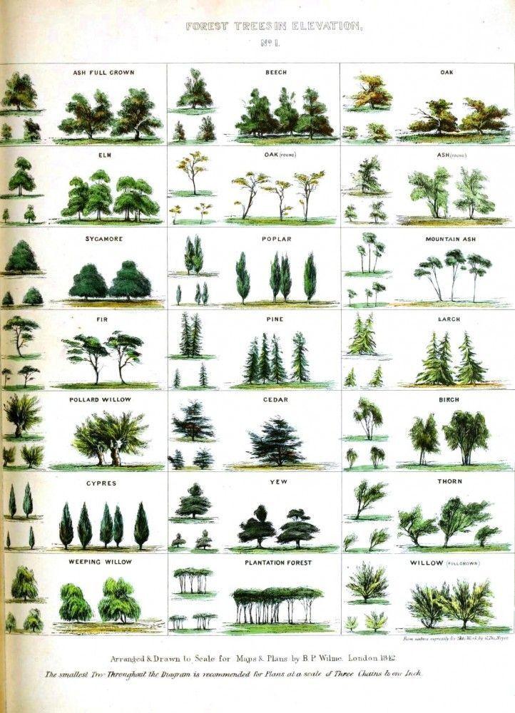 tree identification Google Search Trees Pinterest