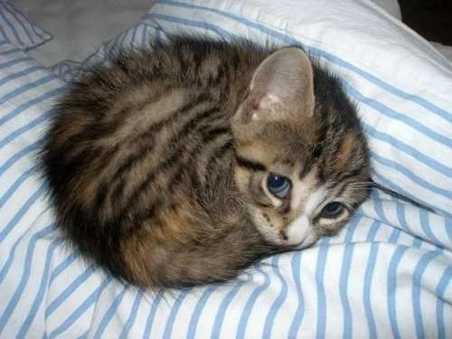 OH MY GOD The cutest kitten