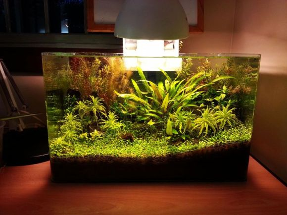 1000+ images about Freshwater Nano on Pinterest ...