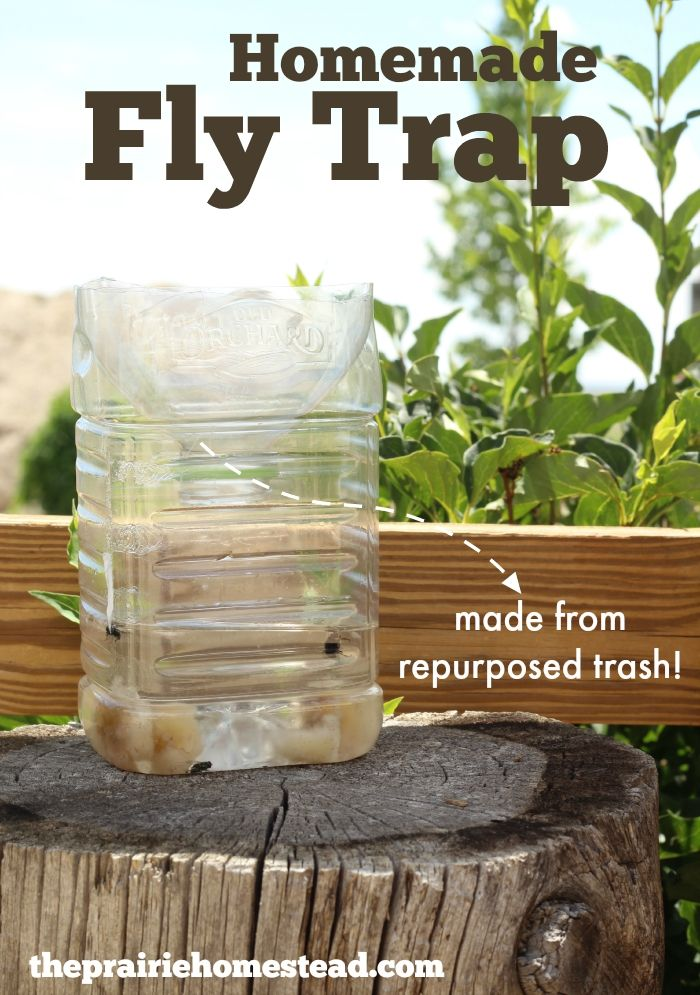 Homemade Fly Trap Homemade, Fly traps and Repurposed