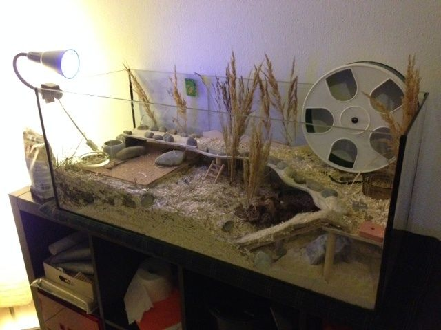 42 Best Images About Cage Ideas On Pinterest Hamster