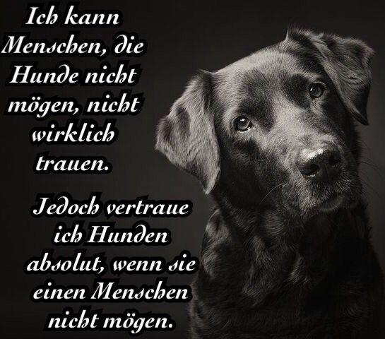 Ideas About Labrador Zitate Auf Pinterest