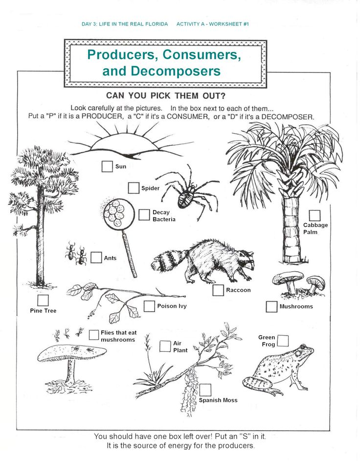 producers, consumers, food chains worksheets