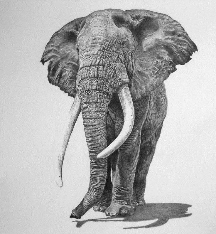 beautiful elephant pencil drawing Hyper Realistic