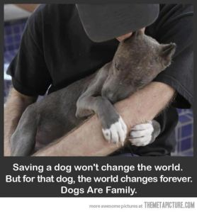 Image result for saving a pet