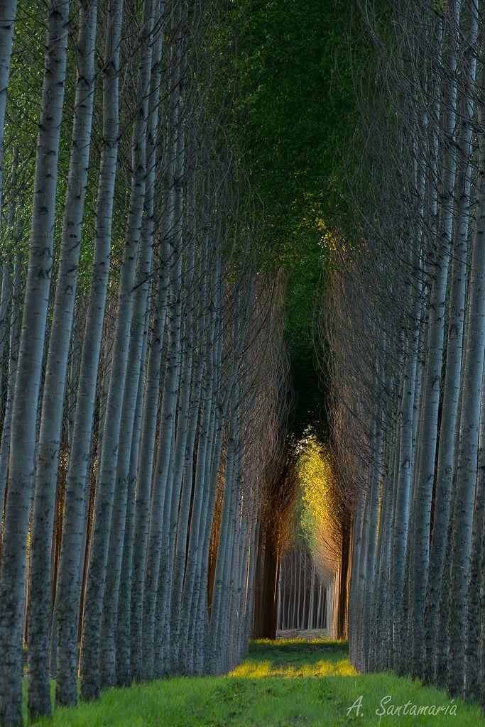 Capilla Natural  Catillo, Parral, VII Regin, Chile  Bosque de Alamos