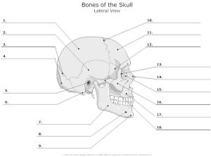 skull in waters view for facial bones | Lateral_View_of
