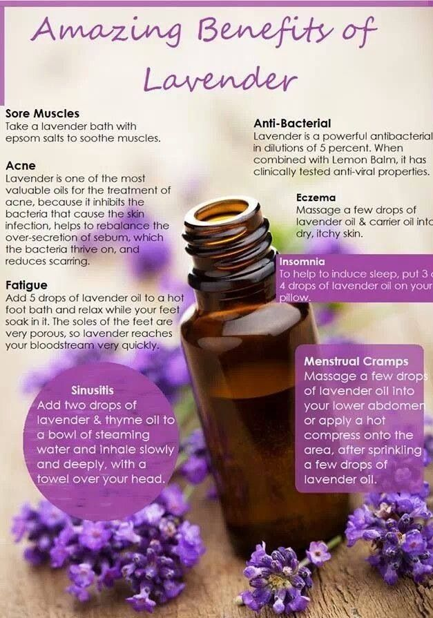 Lavender oil Essential oils, benefits and uses