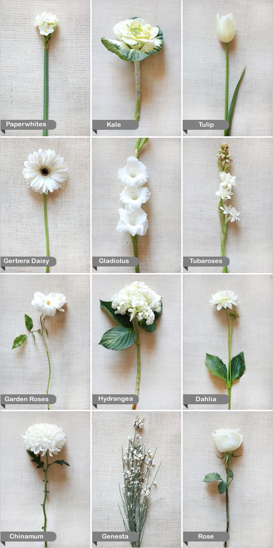 white flowers by name Flowers Pinterest Winter