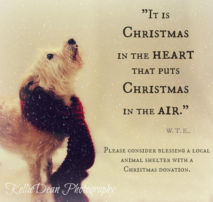 Rescue Dog Senior Pet Adopt Shelter Christmas Quote