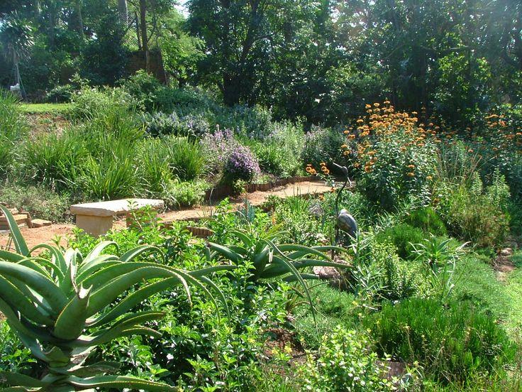 indigenous south african garden Google Search garden
