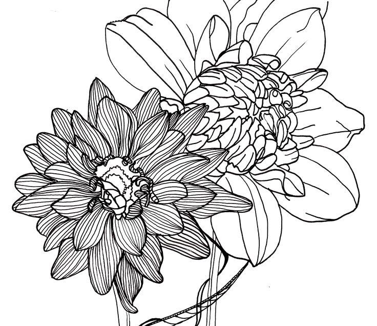 line drawing flowers dahlias Flower Power