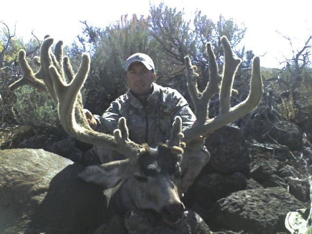 biggest mule deer in the world Elk / Mule Deer