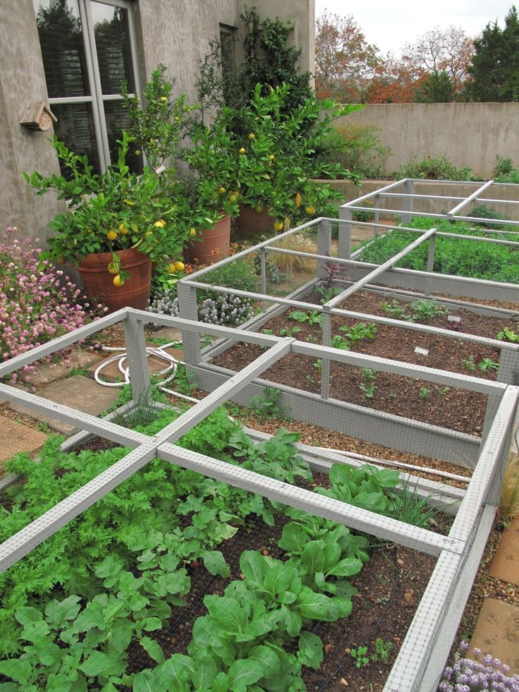 potager. great way to keep chix from scratching