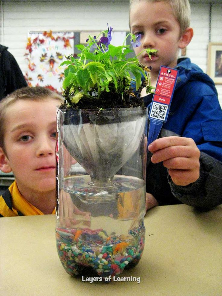 Make a Pop Bottle Ecosystem to show illustrate how the animals, plants, and non-living things in an environment all affect one
