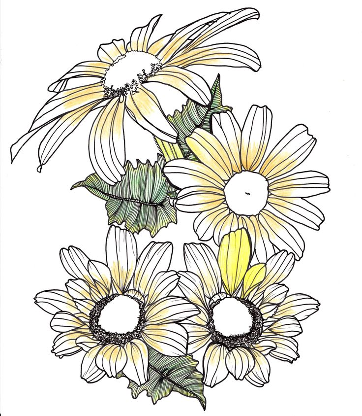 line drawing flowers and leaves Drawings Pinterest