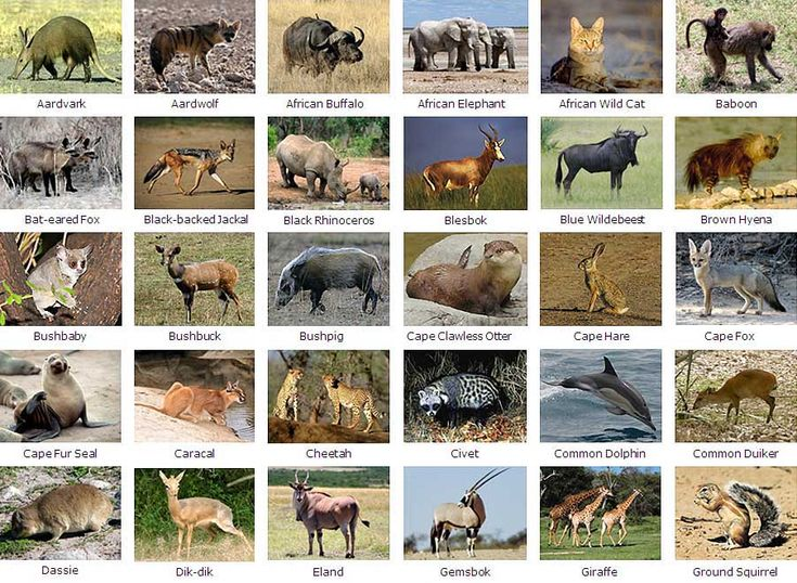 mammals mammals amphibians humans cute mammals