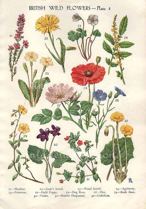 Antique Botanical print British Wild Flowers bookplate