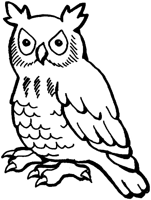 owls drawing basic art drawing drawing owls owls colors pages