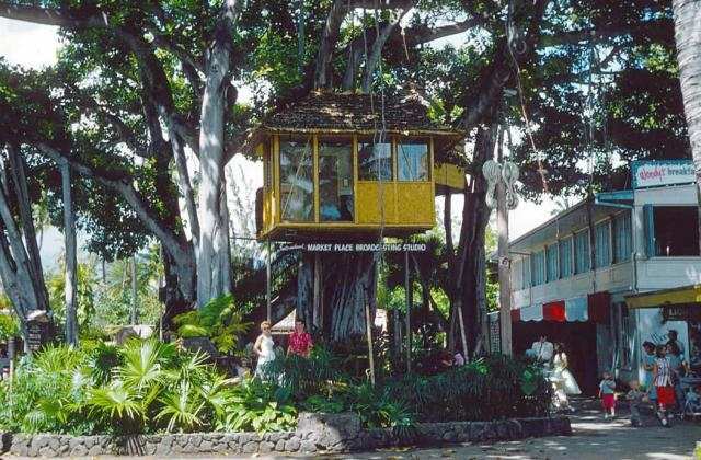 The old treehouse in the International Marketplace