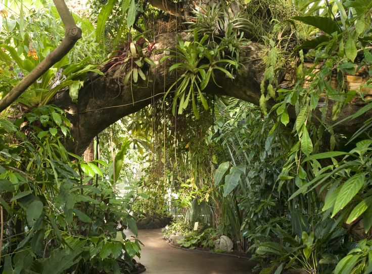 trees and orchids symbiotic relationship Google Search