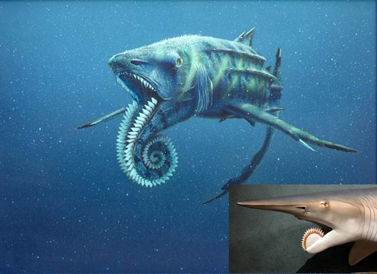 Helicoprion, a prehistoric shark. WTH.. never heard of