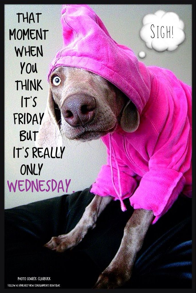 Wednesday humor It's only Wednesday Cute dog Animal