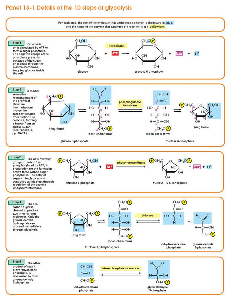 Details of the 10 Steps of Glycolysis Part 2 of 2 Mcat