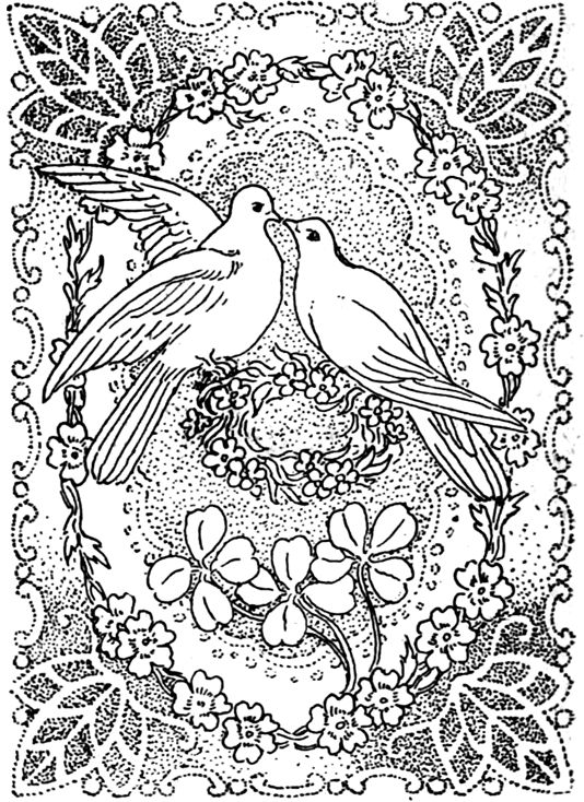 1000 images about bird coloring pages on pinterest dover