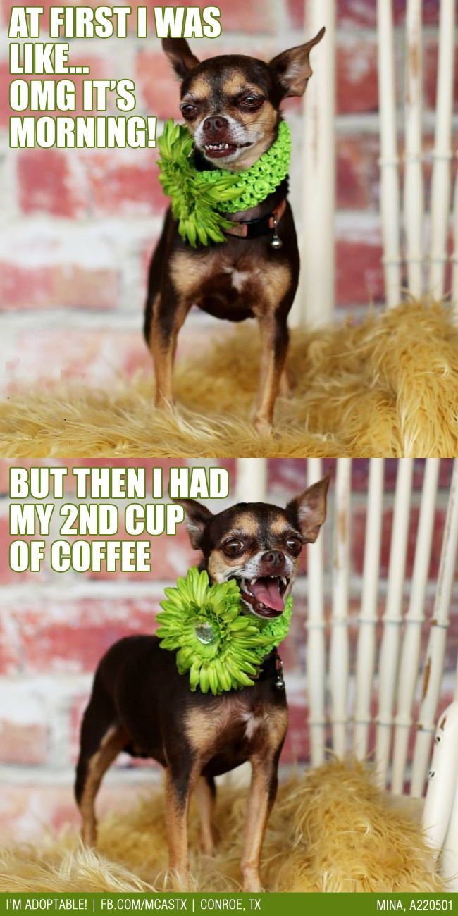 Every morning! funny dogs ADOPTED!!! ADOPTED MCAS