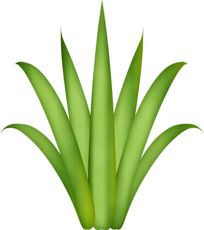 561 Best PLANT GRAPHiCDiGi SCRAP GRASSTREE LEAFNature