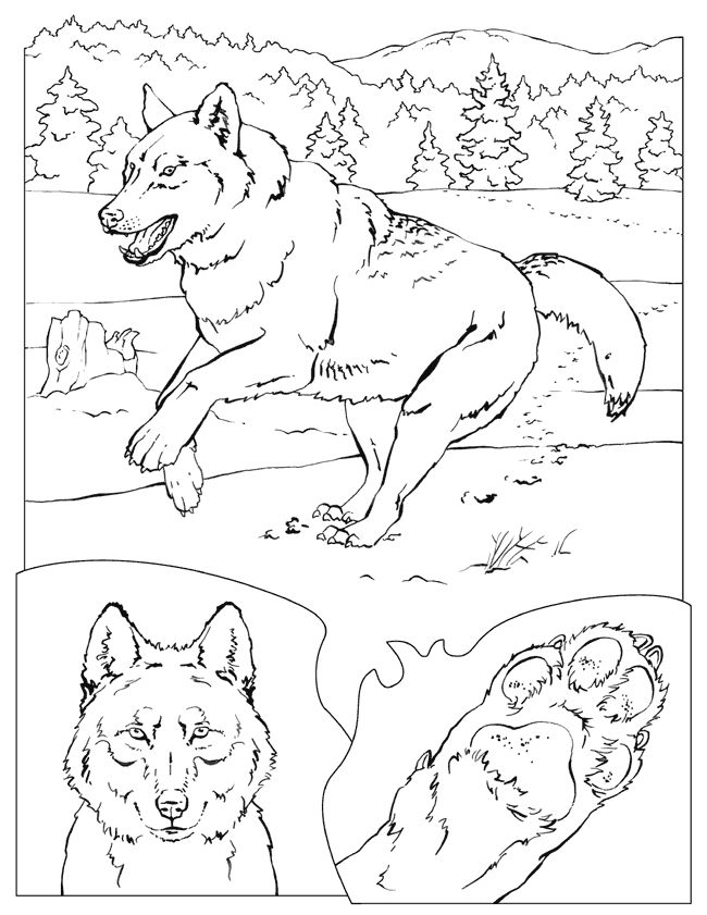 295 Best Ideas About Coloring Book On Pinterest